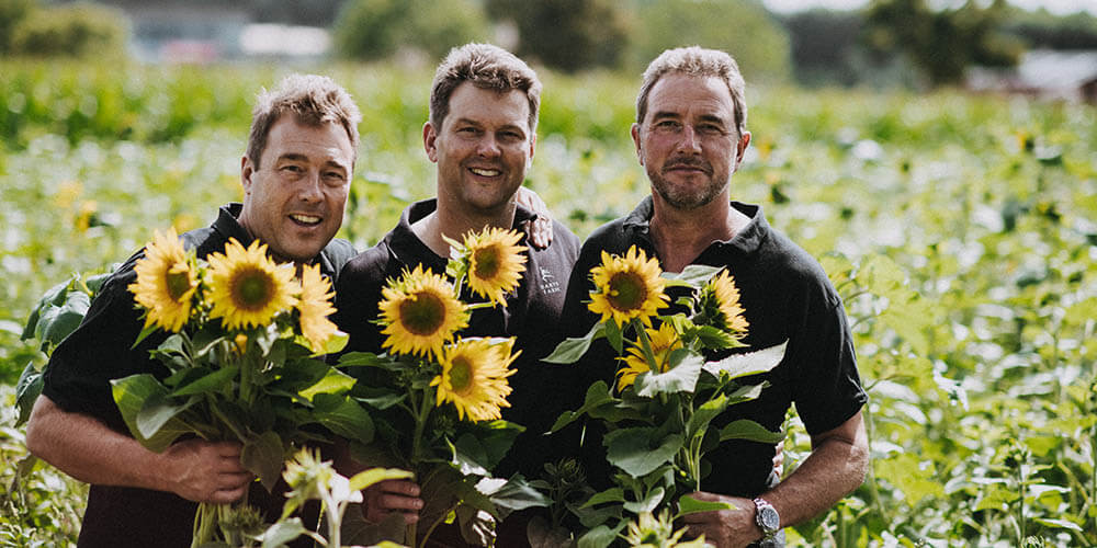 Our Pick Your Own Sunflowers are Ready