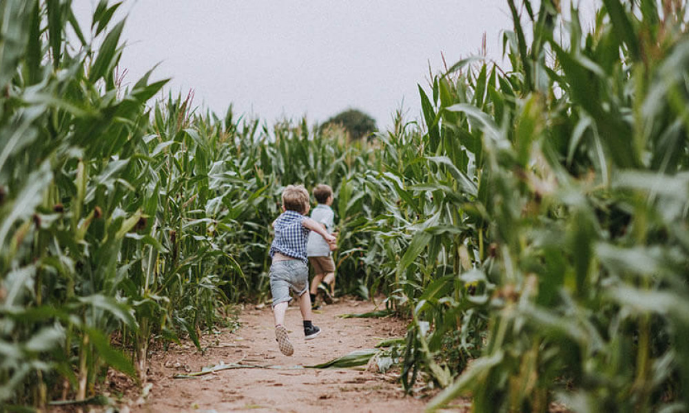 Our Amazing Maize Maze is now open