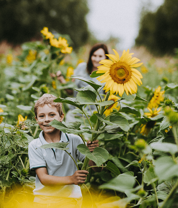 pick-your-own-sunflowers-children-charity-hospiscare-darts-farm-devon_600x700