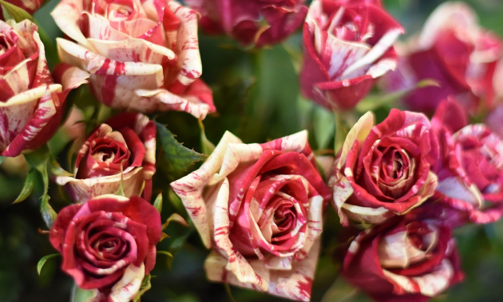 Our top picks for Valentines Day
