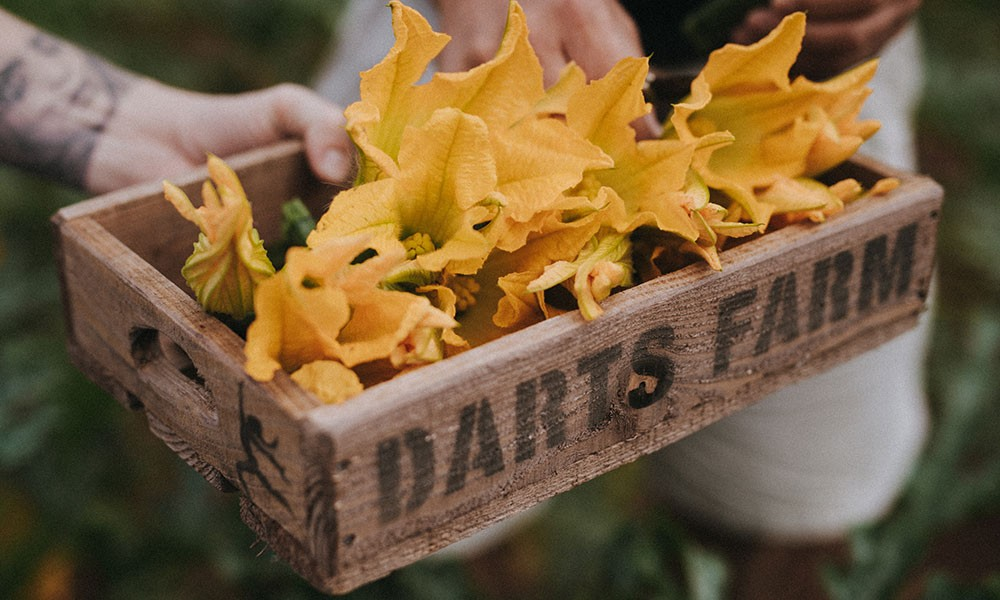 Fried Courgette Flowers with Honey and Vinegar
