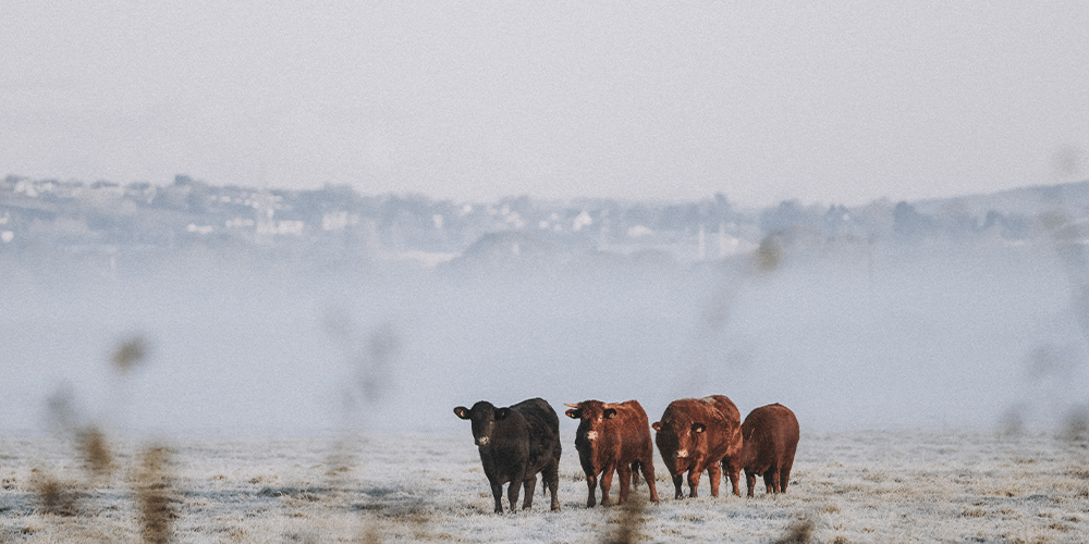 The enemy is not cattle farming, but globalisation