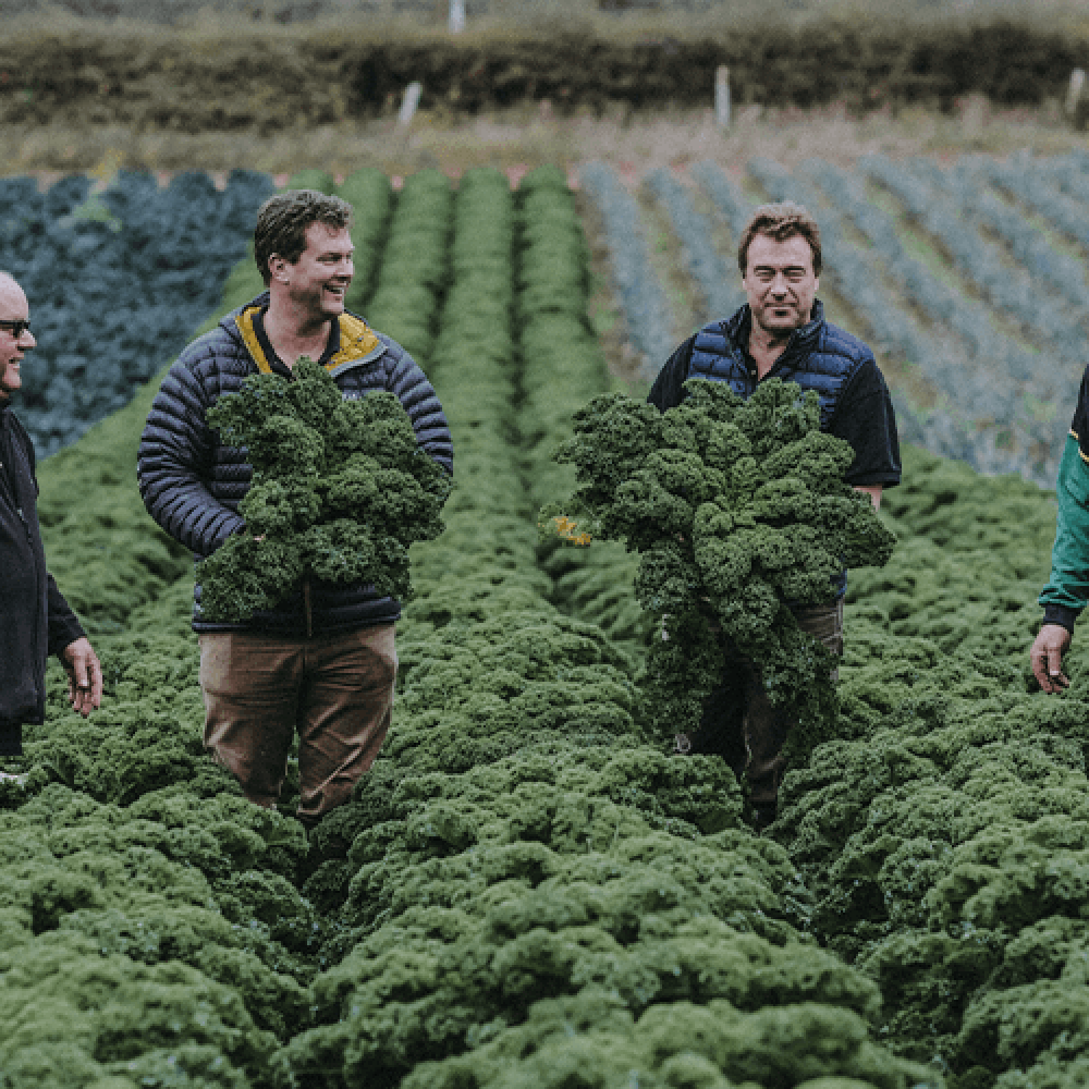 Fresh from our Fields - Kale