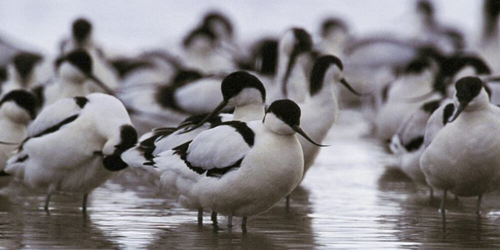 1000x500 avocet-darts-farm-devon